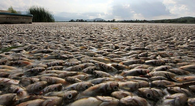 Fukushima japanese government guilty of destroying for Pacific ocean radiation fish